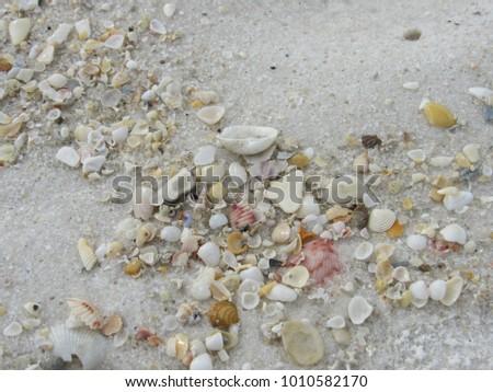 Sea shells on the beach sand #1010582170