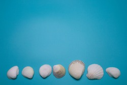 Sea shells on the blue background, with free space for text.