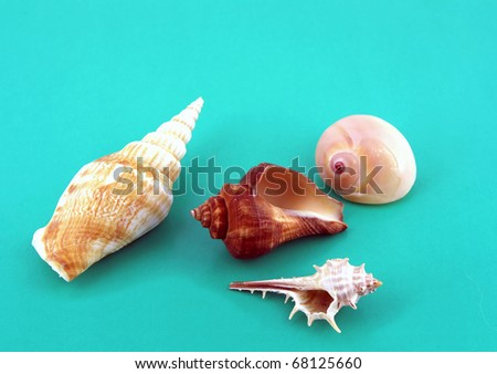 Sea shells on the light turquoise background.