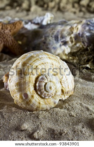 Sea shells on the sand. - stock photo