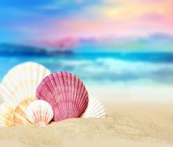 Sea shells on the summer beach. Family of sea shells. Summer concept. Ocean background.