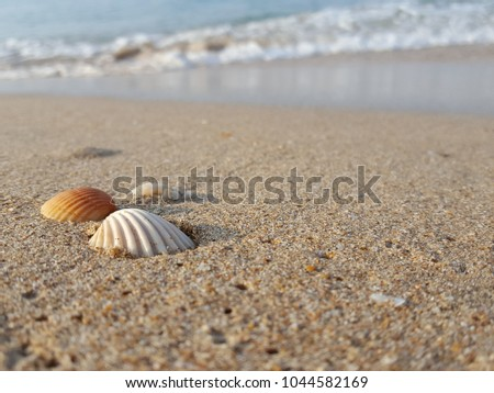 Sea shells on tropical sand summer vacation travel concept. Empty for product  display. Ready for product display montage. Fair in blurred and de-focus, Soft focus,Select focus #1044582169
