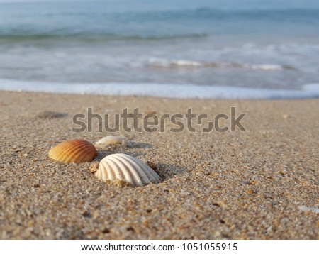 Sea shells on tropical sand summer vacation travel concept. Empty for product  display. Ready for product display montage. Fair in blurred and de-focus, Soft focus,Select focus #1051055915