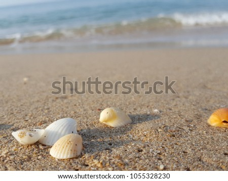Sea shells on tropical sand summer vacation travel concept. Empty for product  display. Ready for product display montage. Fair in blurred and de-focus, Soft focus,Select focus #1055328230