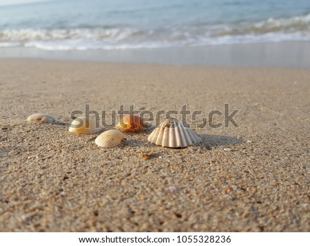 Sea shells on tropical sand summer vacation travel concept. Empty for product  display. Ready for product display montage. Fair in blurred and de-focus, Soft focus,Select focus #1055328236