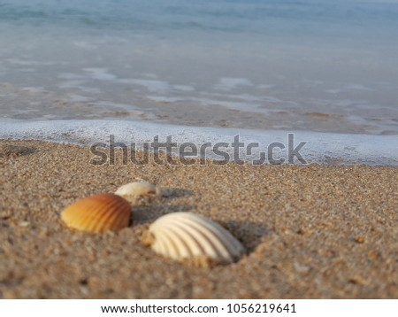 Sea shells on tropical sand summer vacation travel concept. Empty for product  display. Ready for product display montage. Fair in blurred and de-focus, Soft focus,Select focus #1056219641