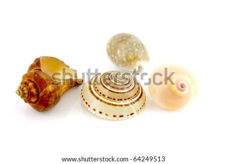 Sea shells. Shallow DOF.