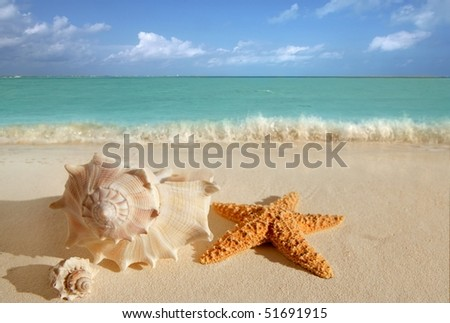 sea shells starfish on tropical sand turquoise caribbean summer vacation travel icon [Photo Illustration]