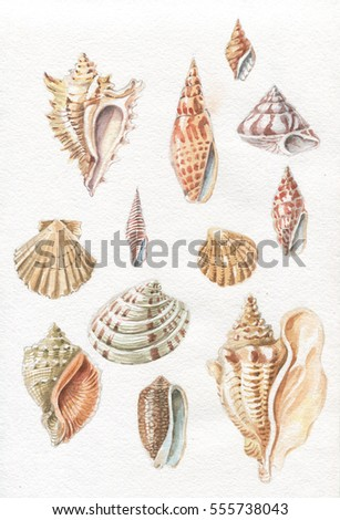 sea shells watercolor drawing