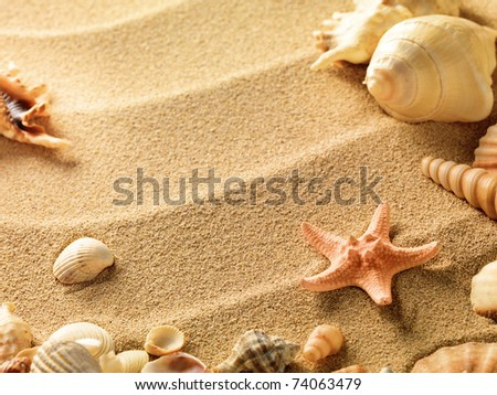 sea shells with sand as background - stock photo