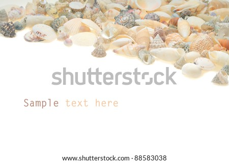 sea shells with white background