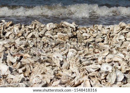 Sea shore covered with oysters and shells thrown out by the storm. #1548418316