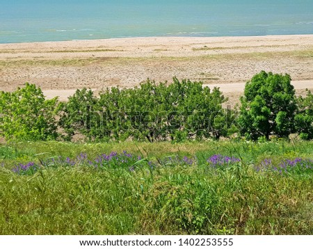 Sea shore, sand, grass and trees. Blooming vicia cracca.