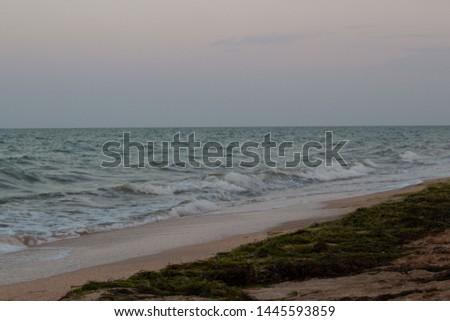 Sea shore with algae on the shore.  Sea of Azov.  Waves. #1445593859