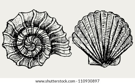 Sea snail and scallop shell. Raster