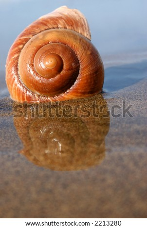 Sea snail on reflective sand at low tide