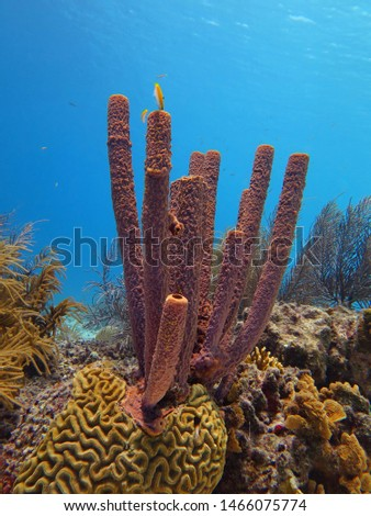 Sea sponges and tropical coral reef. Vivid marine life, seascape photography. Picture from scuba diving on reef. Corals and fish, healthy aquatic wildlife.