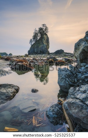 sea stack in sunset time with blue and purple light,scenic view of second beach in mt Olympic National park,Washington,USA.