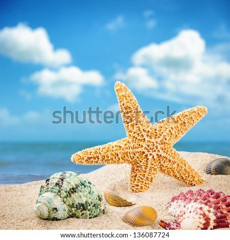 Sea star and colorful shells on coastline