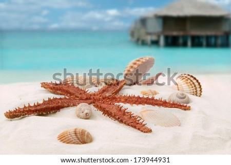 Sea star and colorful shells on coastline  - stock photo