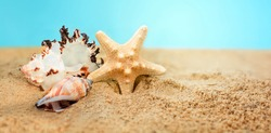 Sea star and colorful shells on coastline.Summer beach.Vacation memories from the beach, sea fish and shell.Summer beach background travel concept.Banner.Copy space for text.