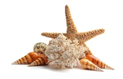 Sea star and coral isolated on white