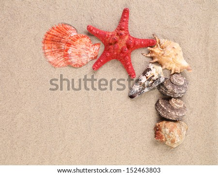 Sea star and shells on the sand