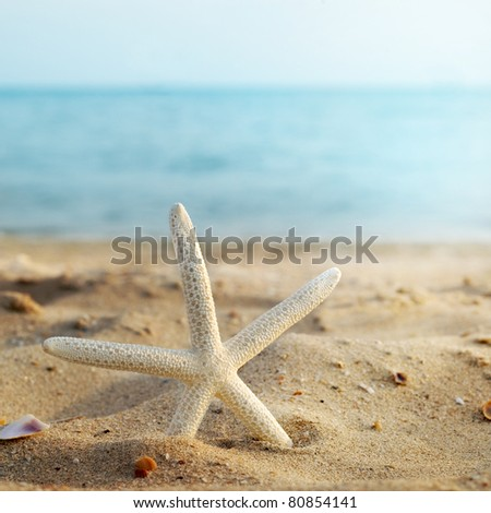 sea star in sand beach