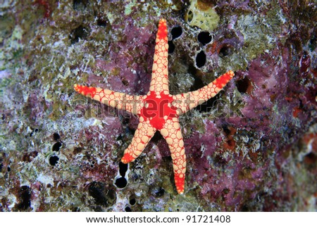 Sea star in the coral reef