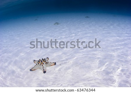 Sea star on a sandy sea bottom with blue water background