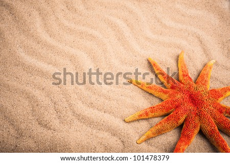 sea star on sand as background