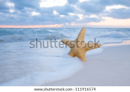 sea star starfish on beach, blue sea and sunrise time, shallow dof