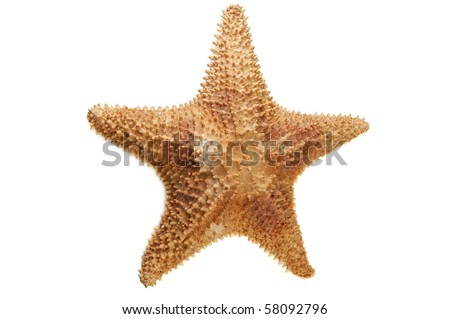 sea starfish isolated on white