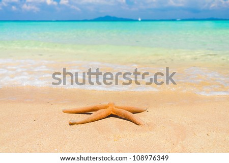 Sea Starlet In a Paradise Far from Home - stock photo