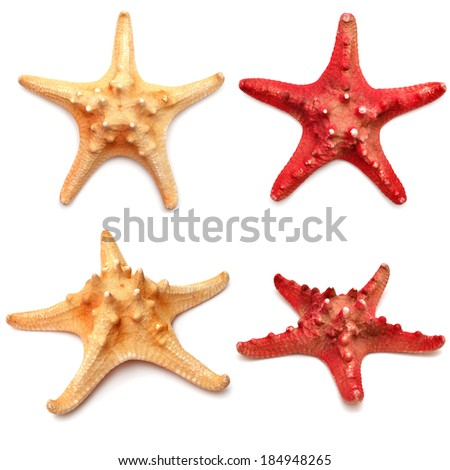 Sea stars collection isolated on white background