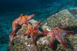 sea stars in a reef colorful underwater landscape background