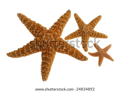 Sea stars isolated on white