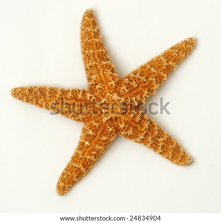 Sea stars on white background