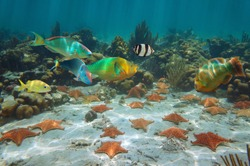 Sea stars with colorful tropical fish underwater in a coral reef Caribbean sea