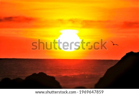 Sea sunset over the horizon. Sunset sea horizon view. A seagull flies against the background of a sea sunset. Sunset horizon sea