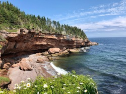 Sea surf on the shore of a forest cliff.