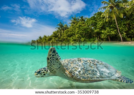 Sea tropical underwater paradise. Sea animal turtle floating underwater. Water line splits image to two parts. Beautiful Maldivian sky with clouds and palm sandy beach. Tropical design element.