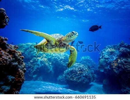 Sea turtle Stock foto ©