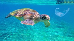Sea turtle and plastic garbage in blue water. Oceanic ecology underwater photo. Marine green turtle and plastic trash. Plastic garbage pollution. Endangered ocean animal suffering from human impact