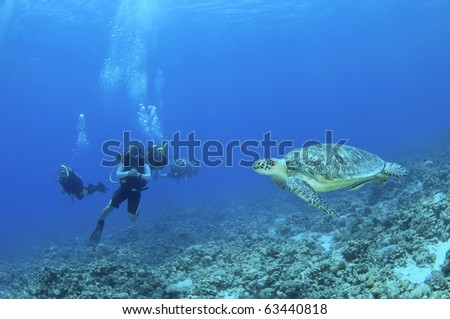 sea turtle and scuba divers in the Philippines