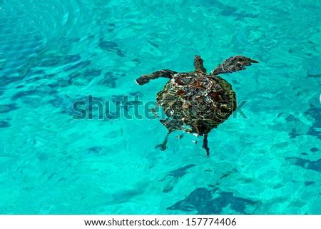 Sea Turtle at Similan Island, Similan Islands National Park, Phang Nga, Thailand #157774406
