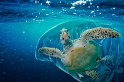 Sea turtle (Caretta caretta) trapped in a plastic bag. Pollution in oceans concept.