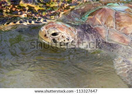 Sea turtle comes up for a breath