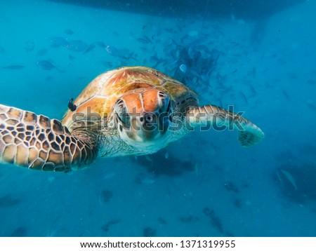 Sea turtle doing selfie