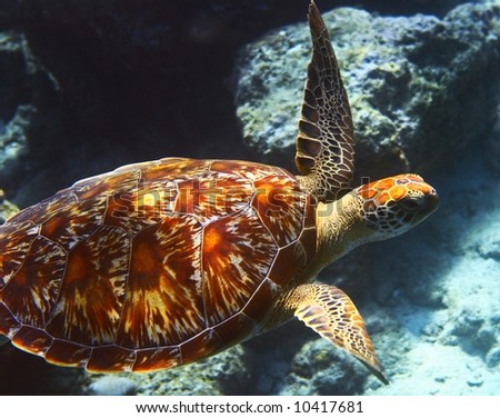 sea turtle is on an ocean bed stock photo
